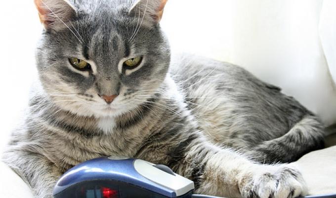 Jak zapobiec wybudzaniu komputera myszką