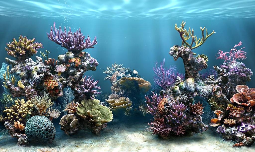 dream aquarium screensaver for windows 7 free download