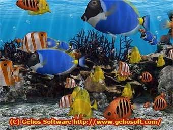 3d Fish School Screensaver Zmiana Wygladu Windows