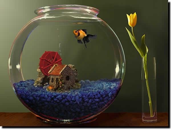 Goldfish Aquarium Zmiana Wygladu Windows